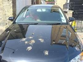 car_birds_ok